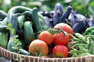 無農薬栽培の家庭菜園で収穫した野菜が、季節ごとに食卓に多く並びます。